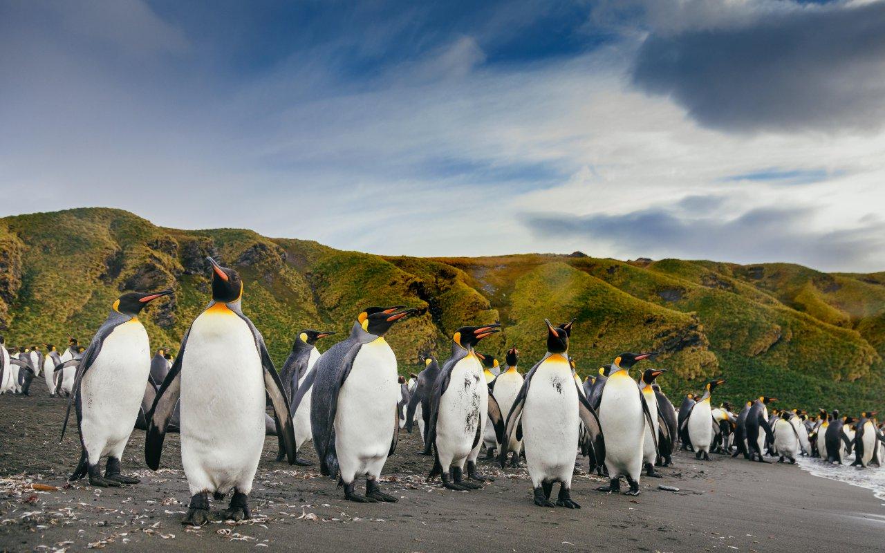 votre voyage en antarctique avec terra antarctica - la vie en antarctique