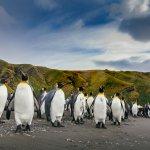 faune et flore antarctique - terra antarctica