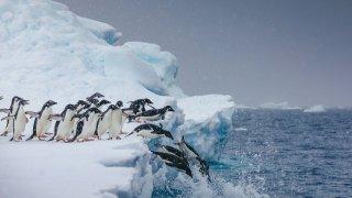 croisières insolites en antarctique