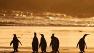 voyage antarctique vol et croisière cercle polaire