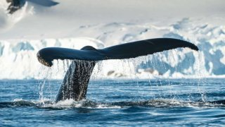 baleine voyage antarctique vol et croisière