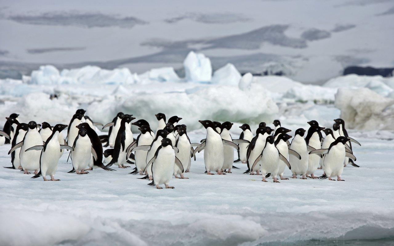 agence terra antarctica équipe