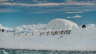 Vol et Croisière en Antarctique et Géorgie du Sud