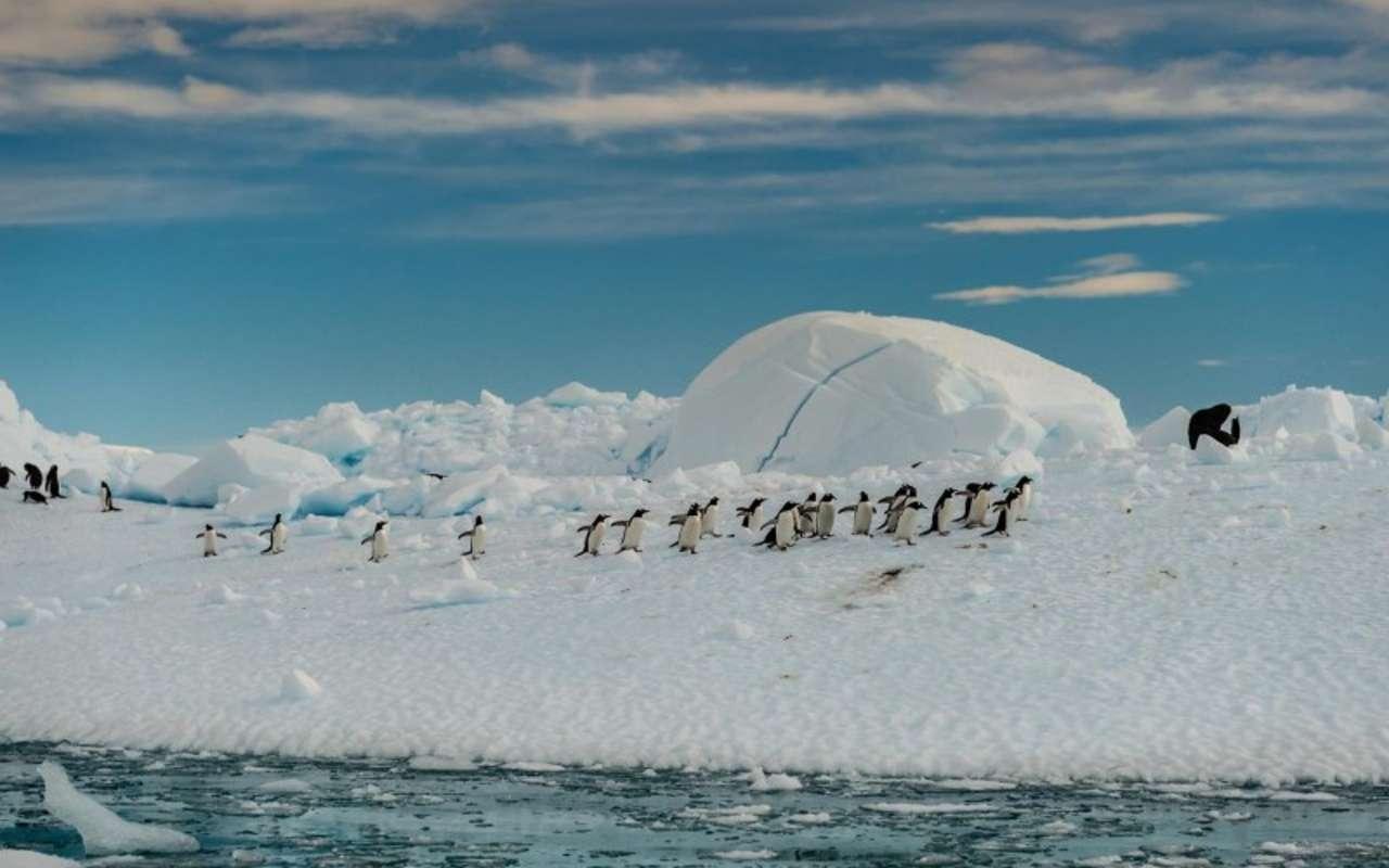 antarctique georgie du sud vol et croisière terra antarctica