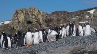 une journée en antarctique - terra antarctica voyages