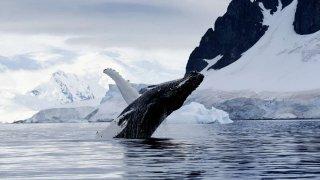 Mer de Weddell et Barrière de Larsen