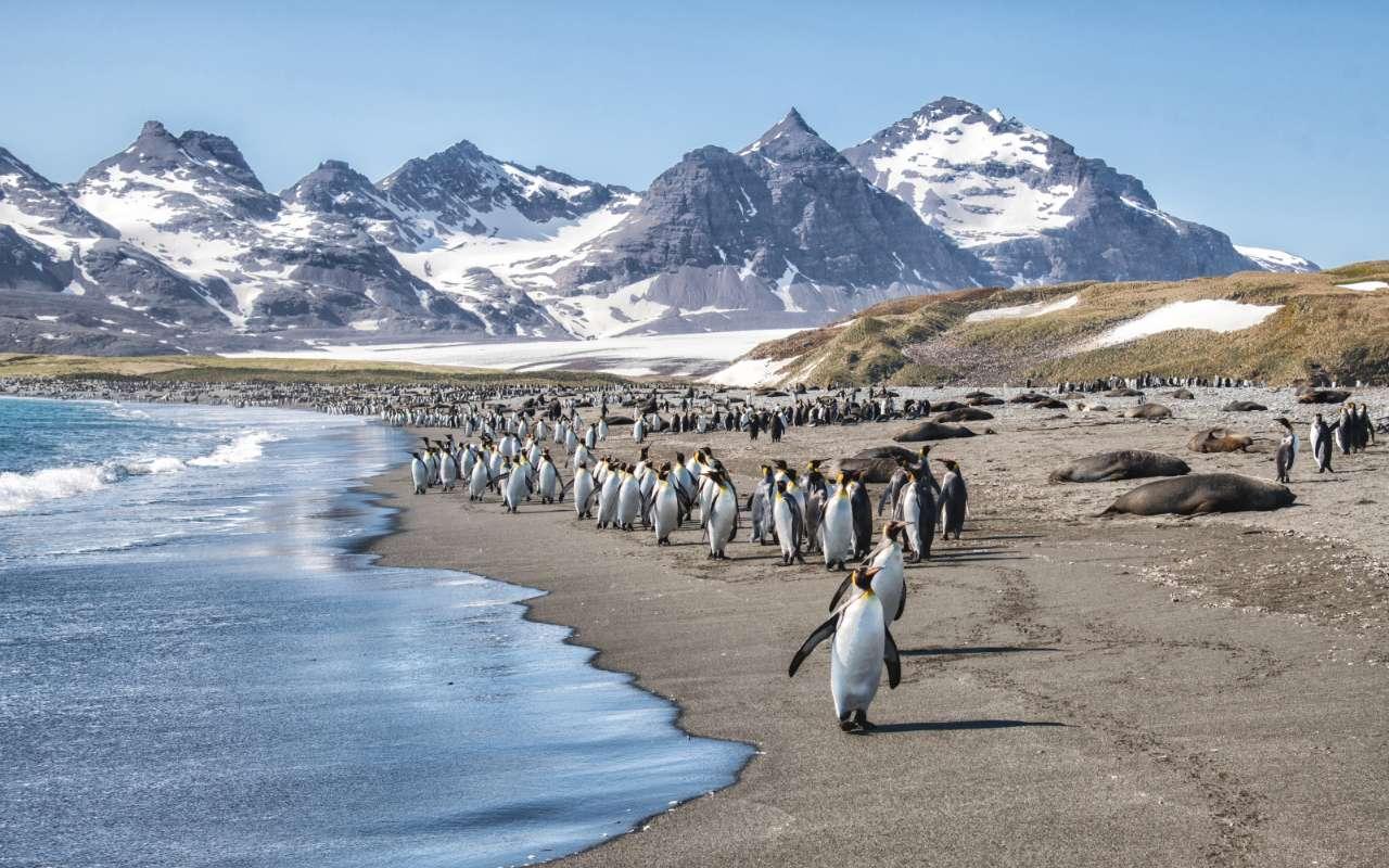 voyage antarctique ile charcot ile pierre Ier - terra antarctica croisières
