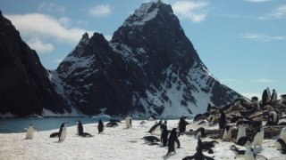 antarctique voyage georgie du sud