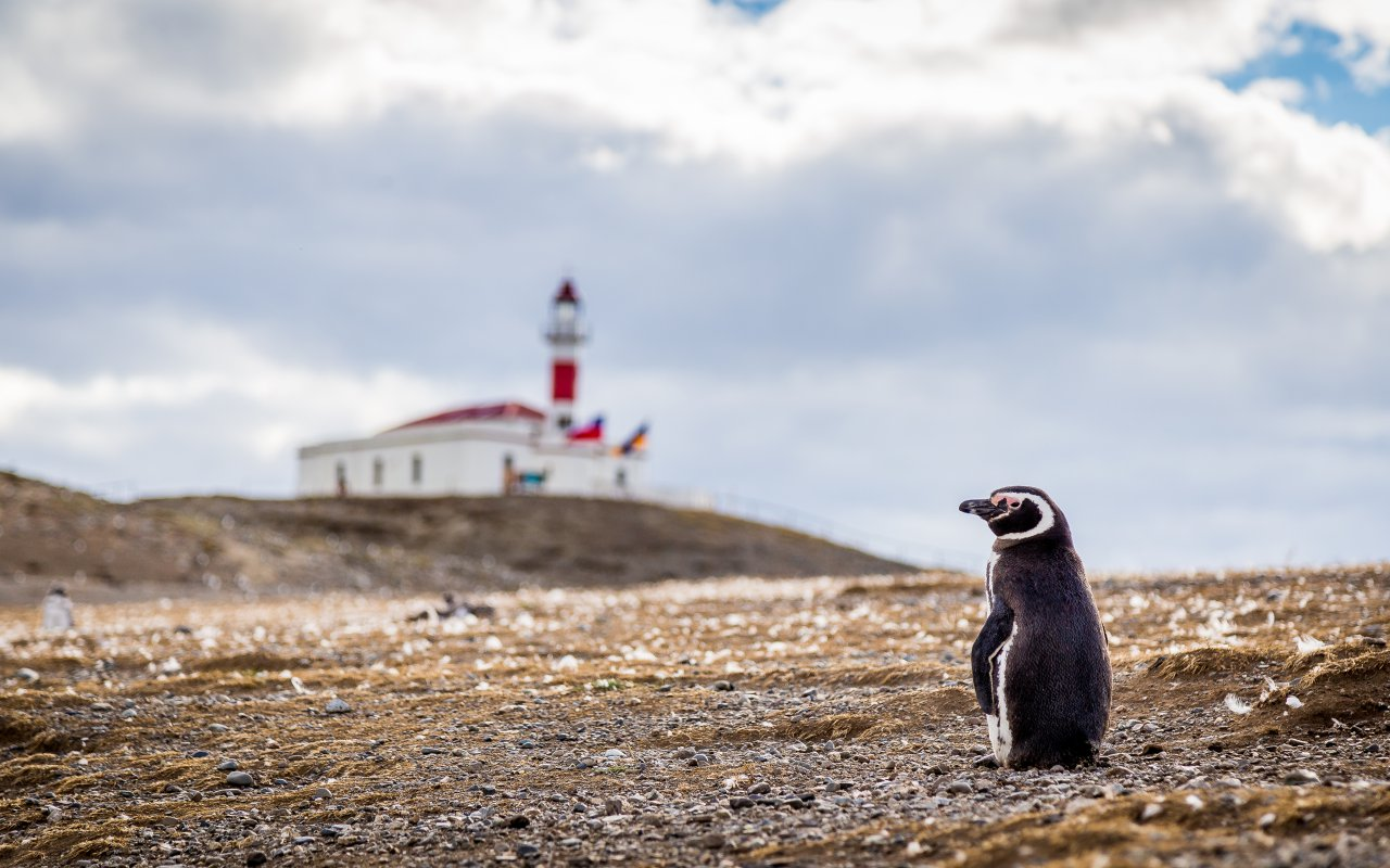 isla magdalena détroit de magellan - histoire patagonie