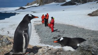 camper en antarctique