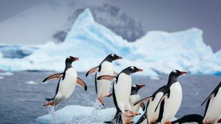survoler le passage de drake - voyage antarctique - terra antarctica