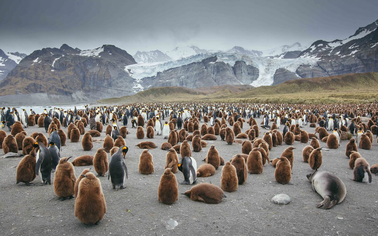 premieres expeditions antarctique - terra antarctica