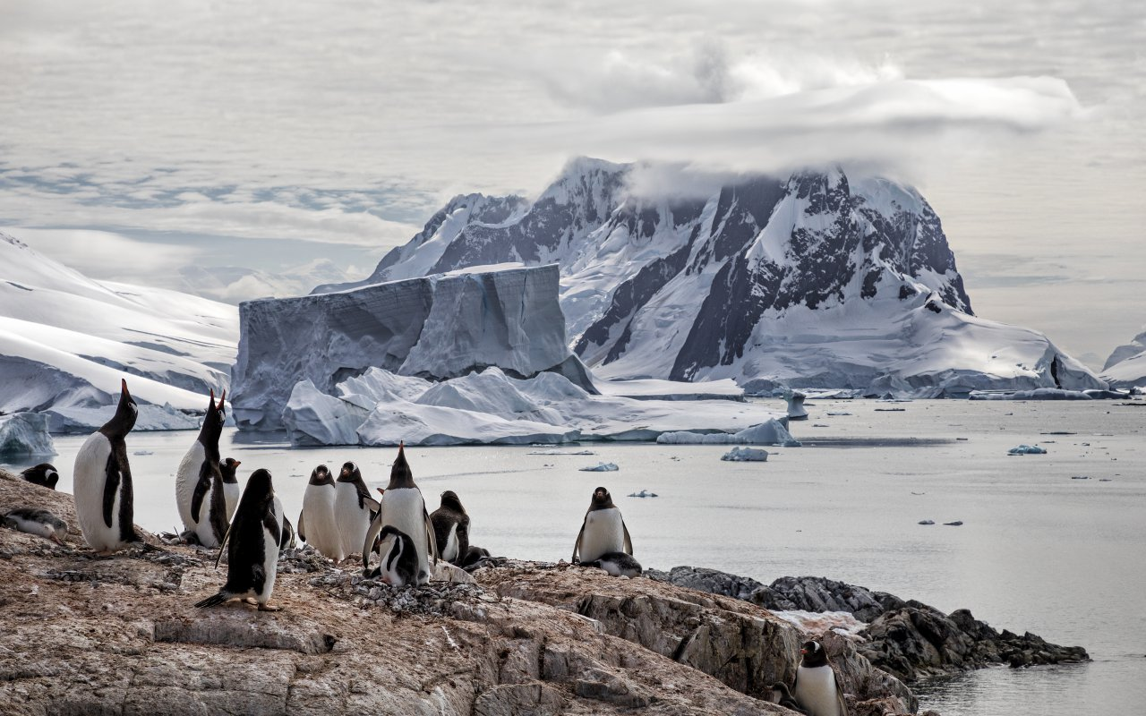 île petermann - antarctique