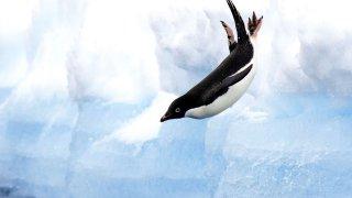 voyage antarctique iles charcot et pierre Ier