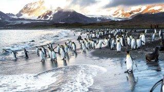 voyage antarctique afrique