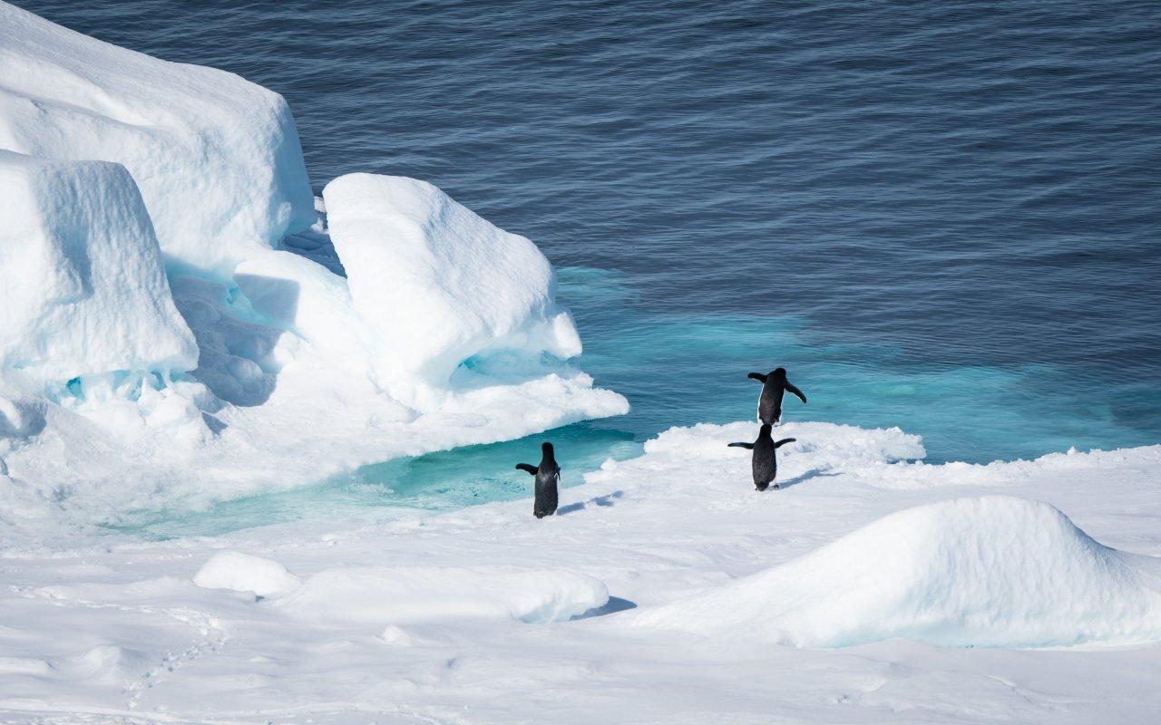 manchots adelie - icebergs - mer de weddell