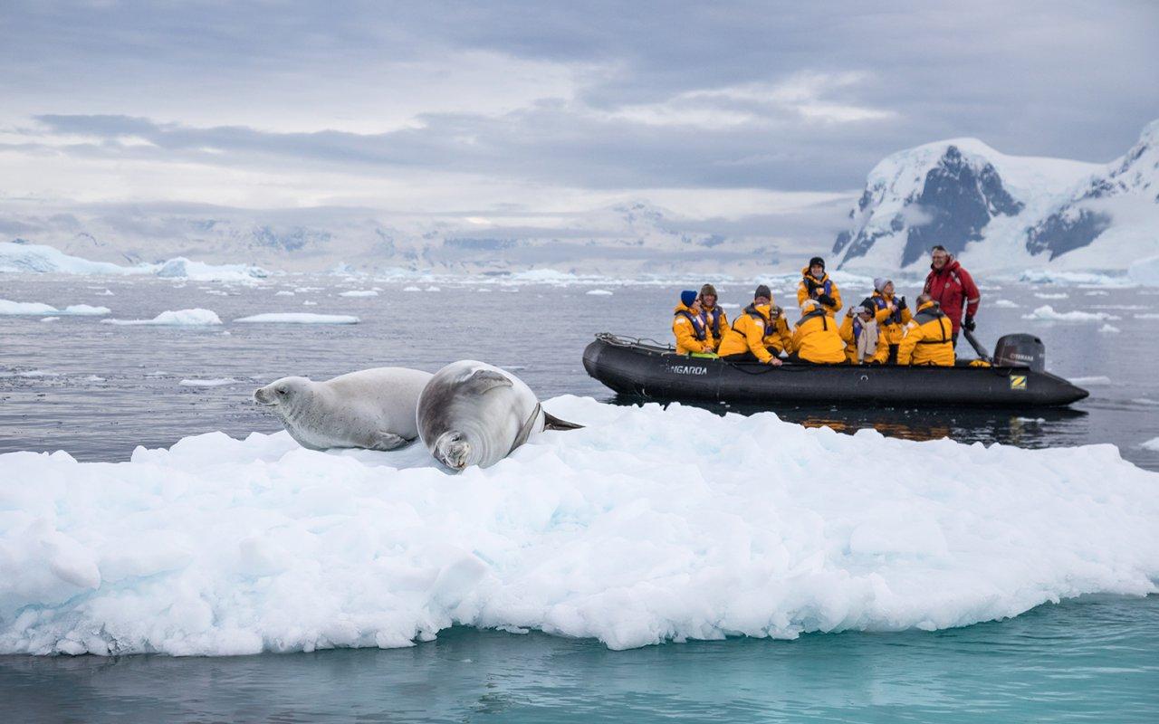 croisiere safari antarctique georgie du sud - terra antarctica