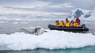 Safari en Georgie du Sud et à la Péninsule Antarctique